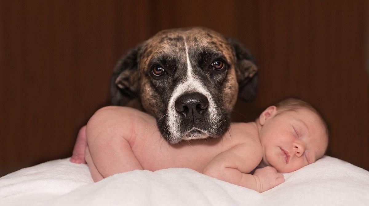 A dog with its head on a sleeping newborn